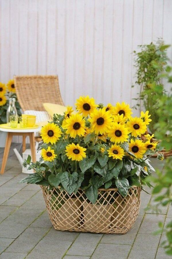 sunflower garden ideas
