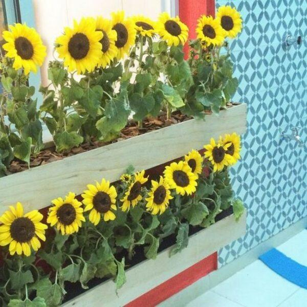 sunflower planter box