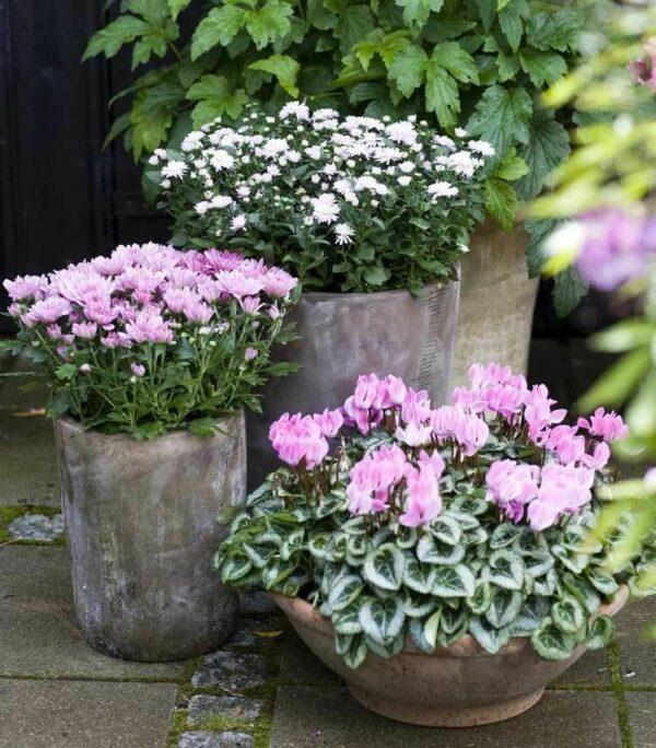 fall plants for pots